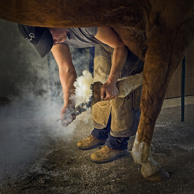 "2nd - ""Farrier Visit"" by Inge Riis McDonald"