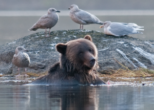 Wildlife Workshop with Steve Williamson @ Qualicum Beach Civic Centre | Qualicum Beach | British Columbia | Canada