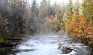 October Field Trip @ Stamp River Falls | Port Alberni | British Columbia | Canada