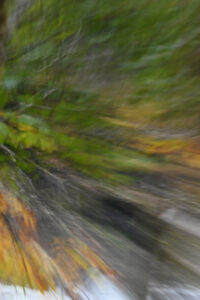 November Assignment - Intentional Movement @ where ever you would like